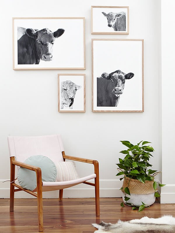 sarah maitland interiors cow images